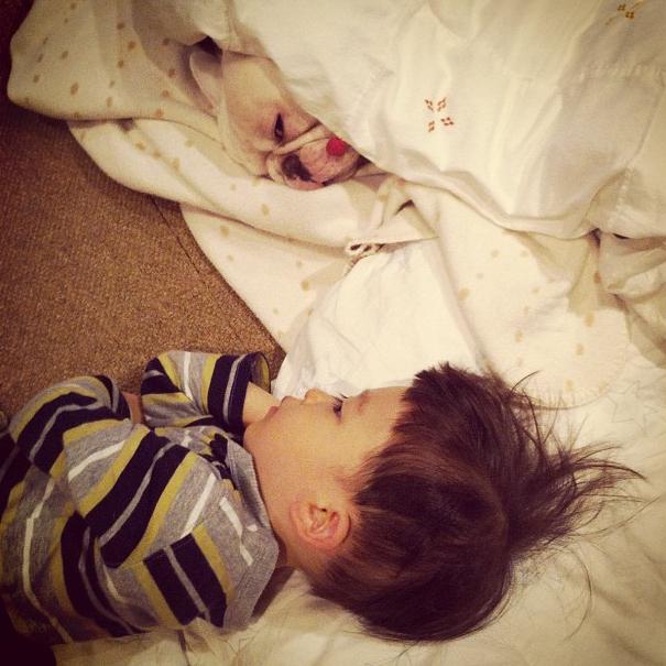 Dogs Sleeping Avatars