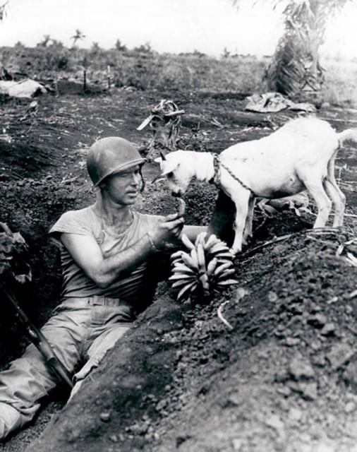 photos-historiques-soldat-partage-une-banane-avec-une-chevre-1944