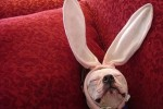 l-A-sleeping-Easter-bunny