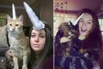 cat-unicorn6