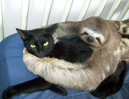 catslothfriends