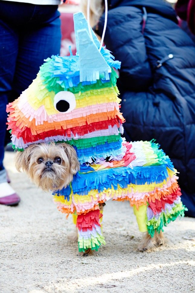 Cute Dog Halloween Costumes: 30 Suggestions De Costumes D'Halloween Pour Ton Chien Qui
