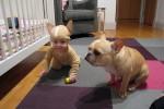 baby_bulldog_costume