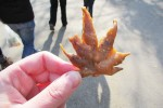 japanese-fried-maple-leaf-tempura-4
