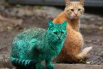 chat-vert-bulgarie-green-cat-6