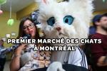 Chats-Montreal