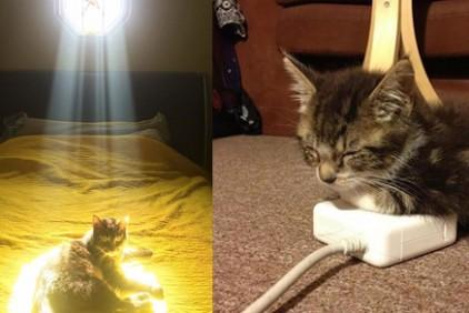 chat-chaleur