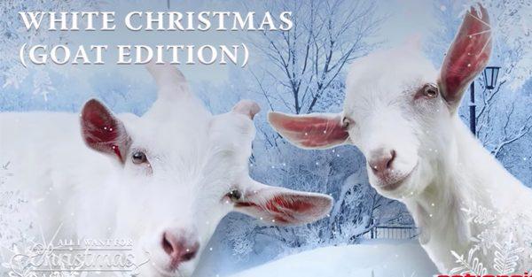 Des chèvres qui chantent Noël, t'es pas prêt à ça!