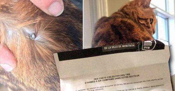Un individu utilise sa carabine à plomb sur des chats dans l'arrondissement Plateau-Mont-Royal